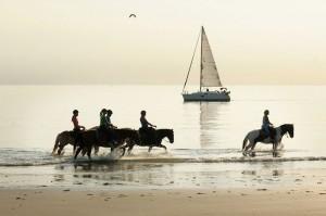 Strandrit Paard Zeeland
