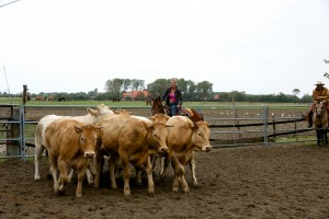 Cutting clinic met Patrick van Coninckxloey